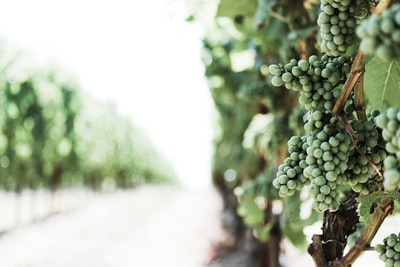 Aussie wine critic wins top prize in Wine Magazine's 'Wine for the Winners' poll